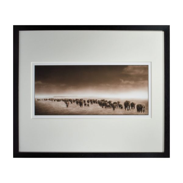 nick-brandt-photograph-elephants-black-white-for-sale-DSC_0025a